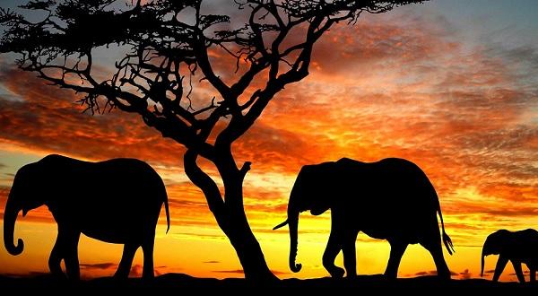 Élet az elefántok földjén