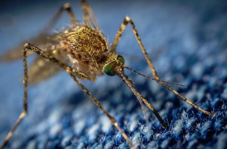 Szúnyoggyérítés: de hogyan?!